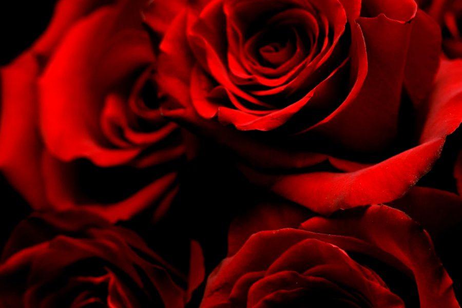 rode rozen uitvaart